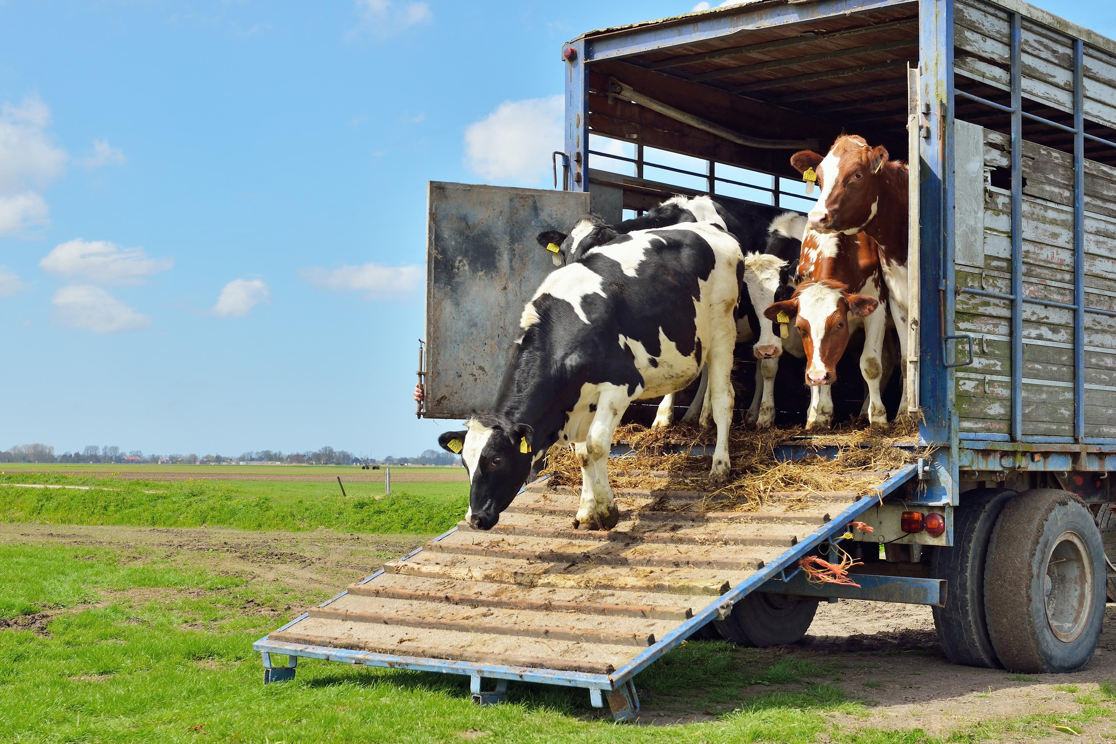 Dierentransport en dierenwelzijn - Transport en Logistiek Nederland